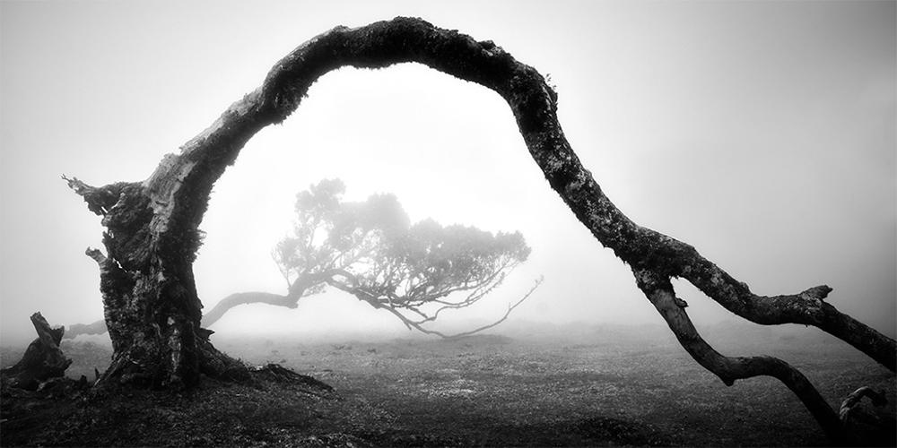 Madeira'nın Gizemli Laurel Ağaçları
