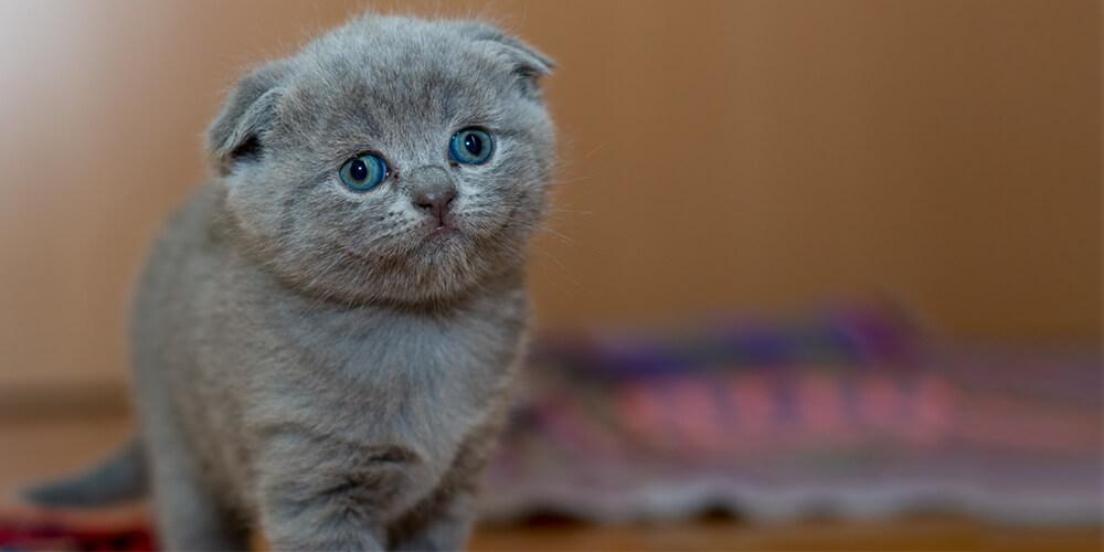 Belçika'da Kedi Beslemek Yasaklandı