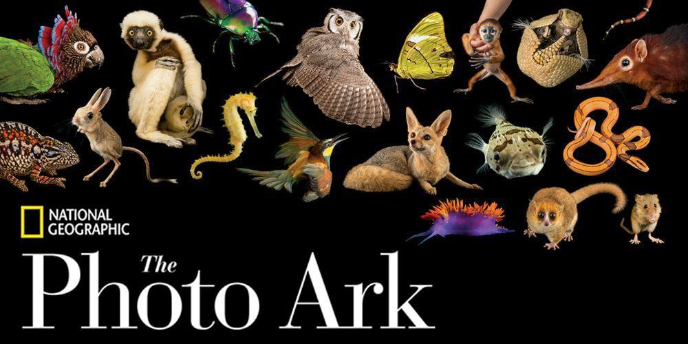 Biyoçeşitliliğin Dev Arşivi: Photo Ark