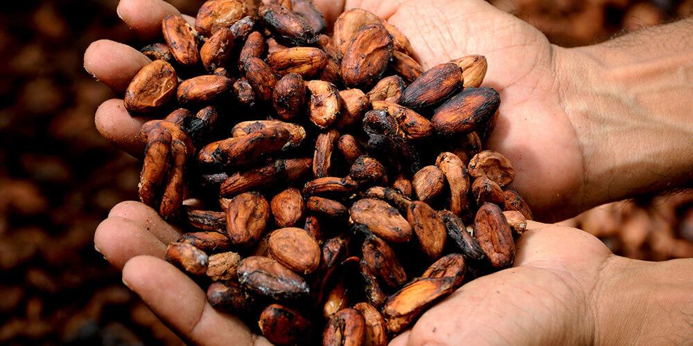 Kakao Üreten İlk 5 Ülke