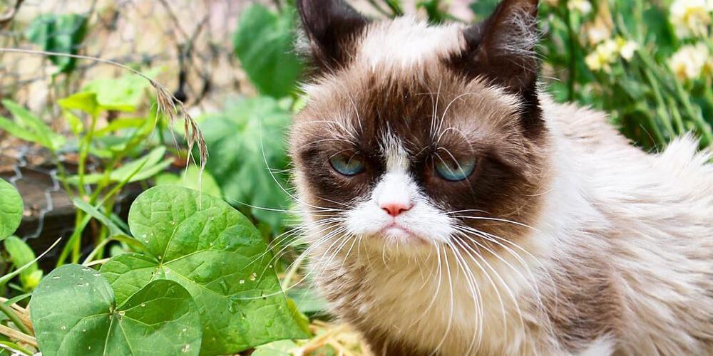 Somurtkan Kedi Hayatını Kaybetti